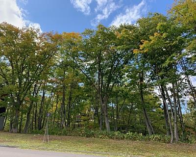 Asahi 349 39 trees